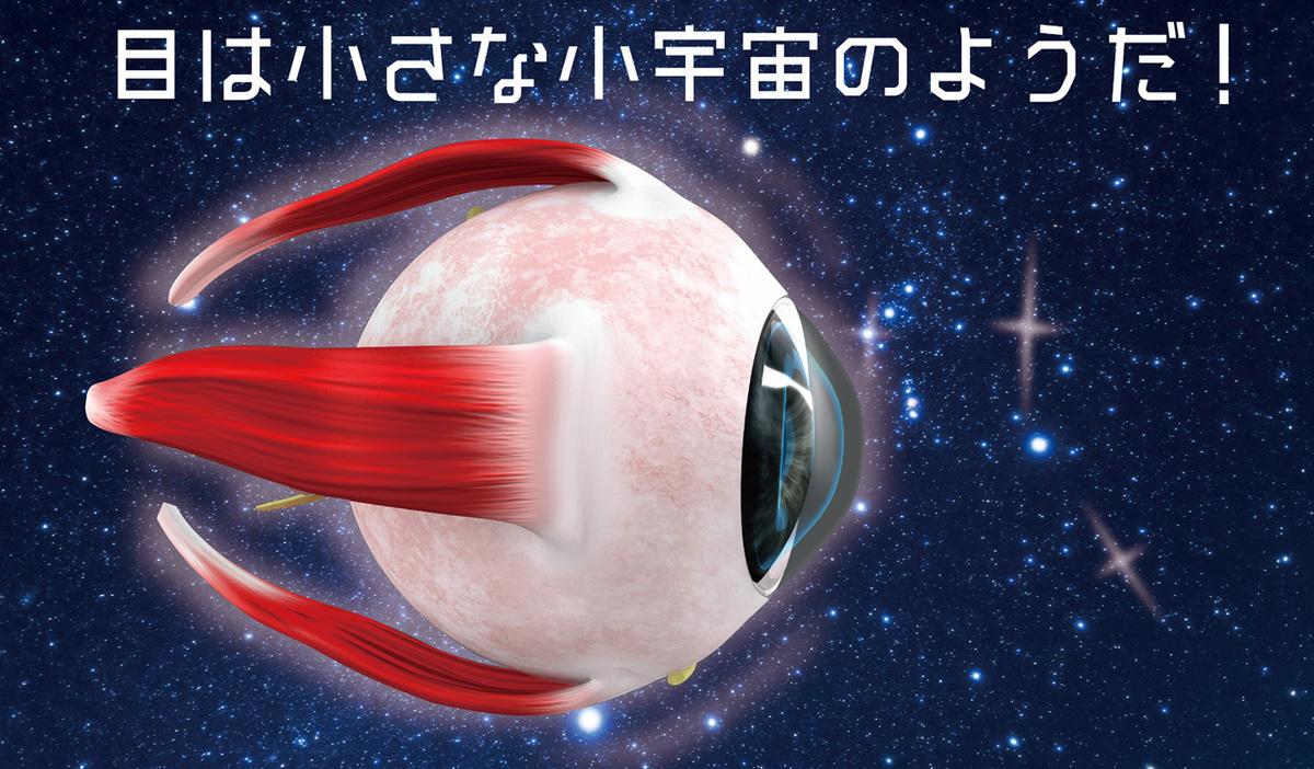 目の構造と機能…目の仕組みを知って、目の病気を理解する。