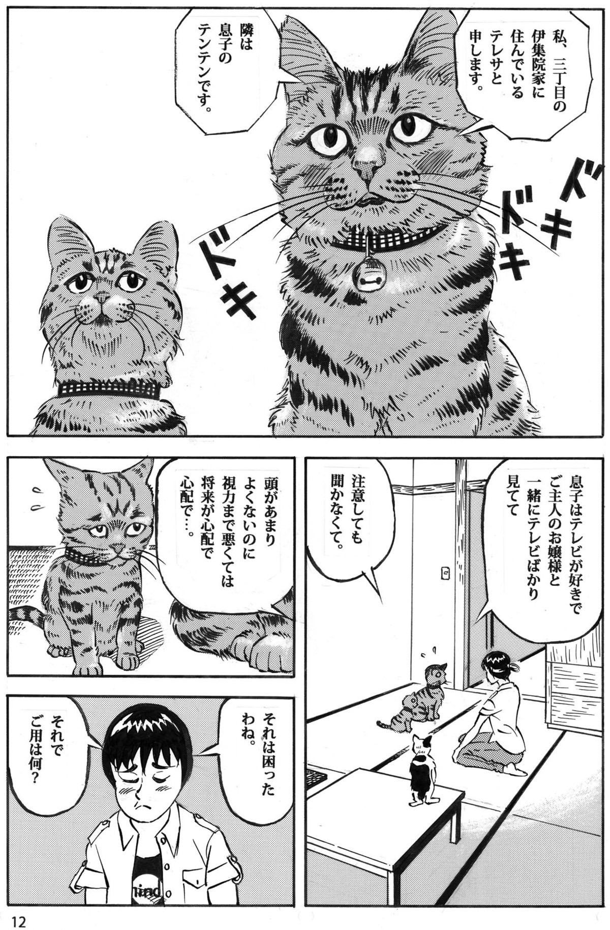 猫だって視力回復したい12